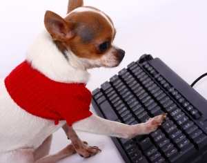 Pet Chihuahua Using A Keyboard And Contacting His Friends On The Internet